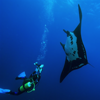Dive Trip from Khao Lak - Joined program